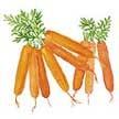 Carrot: Babette image