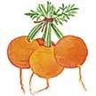 Carrot: Romeo image