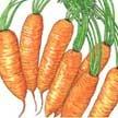 Carrot: Little Finger image