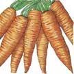 Carrot: Danvers image