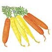 Carrot: Sunshine Mix image