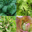 Salad Blends / Mesclun: Fall Mesclun Mix Sampler image