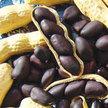 Peanut: Schronce's Deep Black image