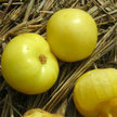 Tomatillo: Dr. Wyche's Yellow image