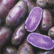 Potato: Purple Peruvian image