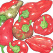 Peppers: Pimiento image