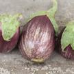 Eggplant: Tadifi image