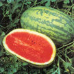 Watermelon: Jubilee Bush image