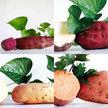 Sweet Potato: Orange, White and Purple Sweet Potato Mix image
