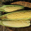 Corn: Ashworth Sweet image