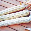 Corn: Cherokee White Flour image