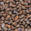 Cowpea: Gray-Speckled Palapye image