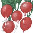 Radish: Cherry Belle image