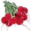 Radish: Crimson Crunch image