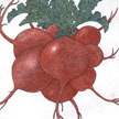 Radish: German Giant image