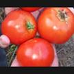 Tomato: Heinz 1350 image