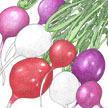 Radish: Easter Egg Mix image