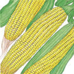Corn: Ashworth image