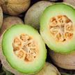 Melon: Eden Gem (Rocky Ford) image