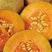 Melon: Charentais image