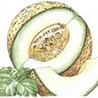 Melon: Rocky Ford Green image