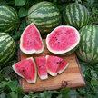 Watermelon: Quetzali image