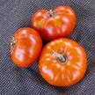 Tomato: Hazelfield Farm image