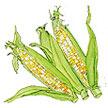 Corn: Bon Jour image