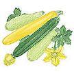 Squash, Summer: Zucchini Tricolor Blend image