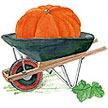 Pumpkin: Wyatt's Wonder image