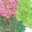Lettuce: Summer Bibb Blend image
