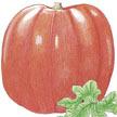 Pumpkin: Big Max image
