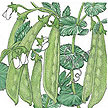 Peas: Oregon Sugar Pod image