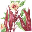 Okra: Burgundy image