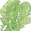 Mustard Greens: Southern Giant Curled image