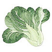 Bok Choy / Pak Choi: Baby Green Fortune image