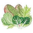 Greens, Asian: Pan Pacific Renee's Stir-fry Mix image