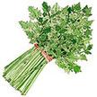 Celery: Amsterdam Seasoning image
