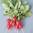 Radish: Cherriette image