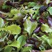 Lettuce: Allstar Gourmet Mix image