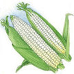 Corn: Livingston: Corn, Double Sweet (Hybrid) image