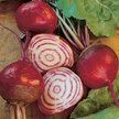 Beet & Beetroot: Chioggia Guardsmark image