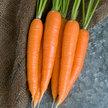 Carrot: Laguna image
