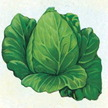Cabbage: Early Jersey Wakefield image