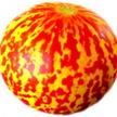 Melon: Tigger image
