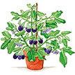 Eggplant: black knight image