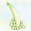 Peas: Lincoln Garden image