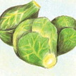 Brussels Sprouts: Catskill image