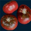 Tomato: Carbon image