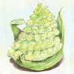 Broccoli: Romanesco Italia image